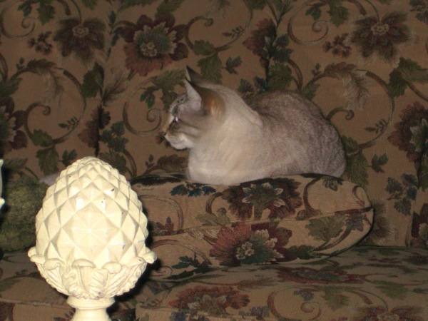 Mox on sofa