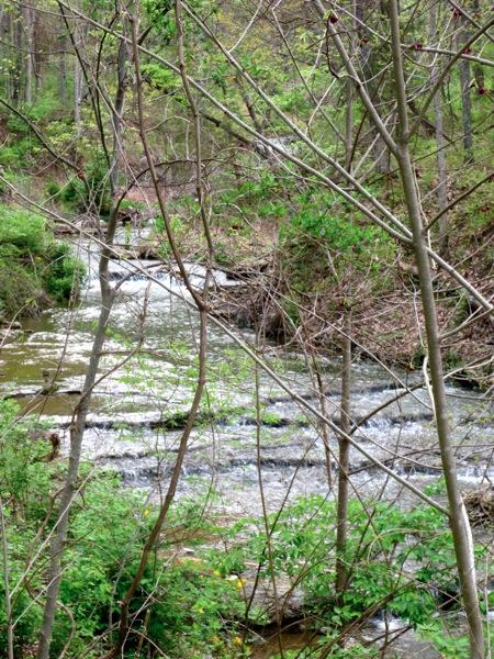 Radnor spring 2013
