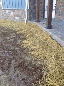 Seed & Straw