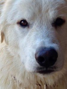 Dixon close-up