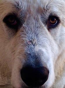 Mason close-up
